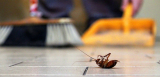 Keeping Your Home Protect Against Pests
